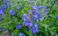 Blue Flowers Perennials  3 Cool Wallpaper