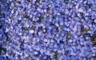 Blue Flowers Perennials  6 Free Hd Wallpaper