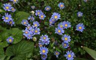 Blue Flowers Perennials  7 Desktop Wallpaper