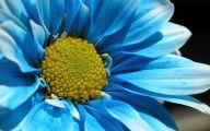 Blue Flowers Pics  4 Free Wallpaper