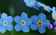 Blue Flowers Pictures  2 Hd Wallpaper
