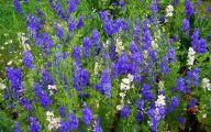 Blue Flowers Pictures  7 Cool Wallpaper