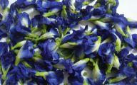 Blue Flowers Purge  11 Wide Wallpaper