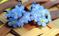 Blue Flowers Purge  9 Desktop Wallpaper
