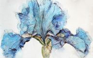 Blue Irises 8 Cool Wallpaper