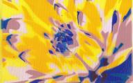 Blue Kiwi Flowers  10 Background