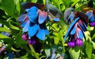 Blue Kiwi Flowers  28 Wide Wallpaper