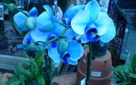 Blue Orchid 51 Background Wallpaper