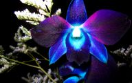 Blue Orchid 56 Cool Hd Wallpaper