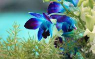 Blue Orchid 63 Free Hd Wallpaper