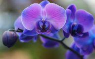 Blue Orchid 71 High Resolution Wallpaper