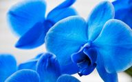 Blue Orchid 73 Background Wallpaper