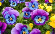Blue Pansies 2 Widescreen Wallpaper
