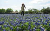 Bluebonnet 19 Hd Wallpaper
