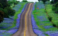 Bluebonnet 22 Free Hd Wallpaper