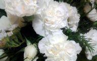 Carnation White Flower 36 Free Hd Wallpaper