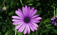 Daisy Flower 11 Cool Hd Wallpaper