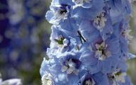 Delphinium Blue Bird 22 Cool Wallpaper