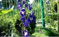 Delphinium Blue Bird 36 High Resolution Wallpaper