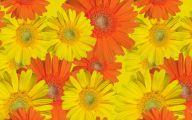 Fall Flowers Wallpaper 20 Hd Wallpaper