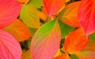 Fall Flowers Wallpaper 9 High Resolution Wallpaper