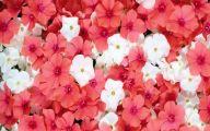 Flower Background 41 Desktop Wallpaper
