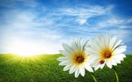 Flower Background 77 Desktop Background