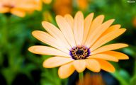 Flower Backgrounds For Desktop 11 High Resolution Wallpaper