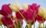 Flower Backgrounds For Desktop 12 Widescreen Wallpaper