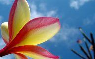Flower Backgrounds For Desktop 13 Hd Wallpaper