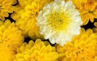 Flower Backgrounds For Desktop 3 Desktop Wallpaper
