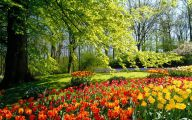 Flower Backgrounds For Desktop 5 Widescreen Wallpaper