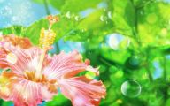 Flower Backgrounds For Desktop 8 Widescreen Wallpaper