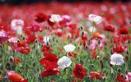 Flower Wallpaper Hd 1080P 13 Free Hd Wallpaper