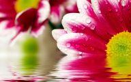Flower Wallpaper Hd 1080P 15 High Resolution Wallpaper