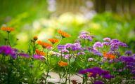Flower Wallpaper Hd 1080P 23 Widescreen Wallpaper