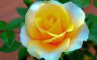 Flower Wallpaper Hd 1080P 27 Cool Hd Wallpaper