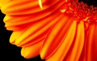 Flower Wallpaper Hd 1080P 30 Background