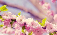 Flower Wallpaper Hd 1080P 8 High Resolution Wallpaper