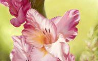 Gladiolus 38 High Resolution Wallpaper