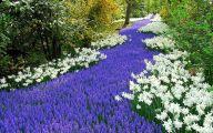 Grape Hyacinth 23 Cool Wallpaper