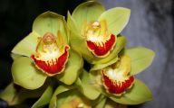 Green Cymbidium Orchid 19 High Resolution Wallpaper