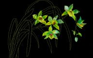 Green Cymbidium Orchid 25 Background