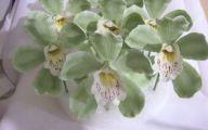 Green Cymbidium Orchid 35 Hd Wallpaper