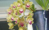 Green Cymbidium Orchid 38 Background Wallpaper