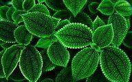 Green Flower Wallpaper 21 Wide Wallpaper
