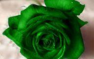 Green Rose  11 Cool Hd Wallpaper