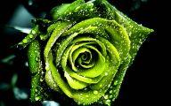 Green Rose  14 Background