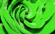 10 Green rose  Backgrounds