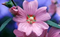 Hd Flower Wallpaper 10 Desktop Wallpaper